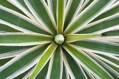 Bandiera verde di britannici dalla pianta dell'agave Fotografie Stock Libere da Diritti
