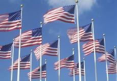 Bandiere americane che volano in vento, Miami, Florida Immagine Stock
