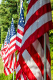 Bandiere americane in una fila Immagine Stock Libera da Diritti