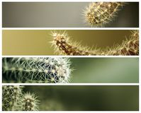 Bandiere del cactus Fotografia Stock