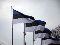Bandiere dell'Estonia immagini stock libere da diritti