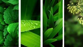 Bandiere della natura Fotografie Stock