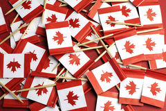 Bandiere nazionali di stuzzicadenti della foglia di acero rossa e bianca del Canada - orizzontale. Immagine Stock