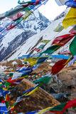 Bandiere nepalesi ad ABC, sul viaggio del campo base di Annapurna, il Nepal Immagini Stock