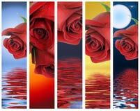 Bandiere verticali con le rose rosse Fotografie Stock Libere da Diritti