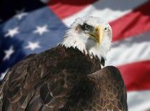 bandierina americana dell'aquila Fotografia Stock Libera da Diritti