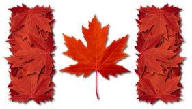 Bandierina del foglio del Canada Fotografie Stock Libere da Diritti