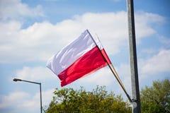 Bandierina polacca Fotografia Stock Libera da Diritti