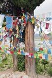 Bandierine tibetane di preghiera sull'albero di cedro Immagine Stock Libera da Diritti