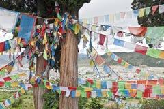 Bandierine tibetane di preghiera sull'albero di cedro Immagine Stock