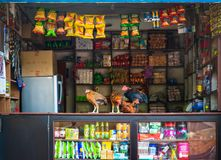 Hens on a shop counter in Nepal Stock Images