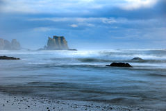 bandon seagull παραλιών Στοκ εικόνες με δικαίωμα ελεύθερης χρήσης
