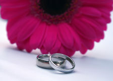 bands rosa bröllop för gerbera Royaltyfria Foton
