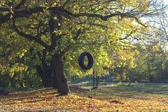 Bandschommeling het hangen van de boom naast de spoorweg Stock Afbeelding