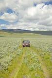 Bandsporen door de lentebloemen van Honderdjarige Vallei dichtbij Lakeview, MT Stock Afbeeldingen