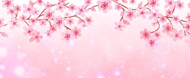 Baner av filialer med körsbärsröda blomningar Arkivbild