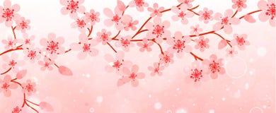 Baner av filialer med körsbärsröda blomningar Royaltyfri Fotografi