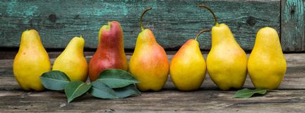 Baner av nya päron med sidor på den mörka lantliga trätabellen Royaltyfri Foto