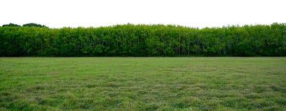 Baner för bakgrund för panoramaträd vitt arkivfoto