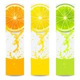 Baner med ny citrusfrukt Royaltyfri Fotografi