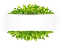Baner med nya gröna sidor Royaltyfria Foton