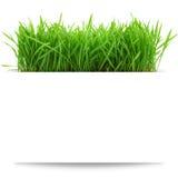 Baner med nytt gräs Royaltyfria Foton