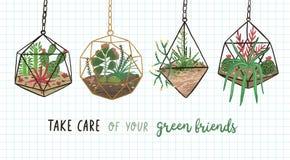 Baner med suckulenter, kakturs och andra växter som växer i hängande exponeringsglasvivarier eller florariums och att ta omsorg a stock illustrationer