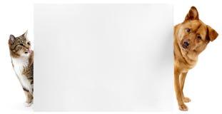 banerkatthund Fotografering för Bildbyråer