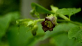 Baneworth mit Blume stock footage