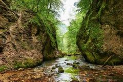 banff加拿大峡谷自然公园河 免版税库存图片