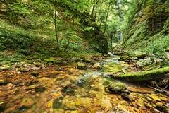 banff加拿大峡谷自然公园河 免版税库存照片