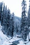 banff εθνικός χειμώνας πάρκων του Καναδά Στοκ Εικόνες