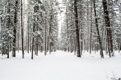banff εθνικός χειμώνας πάρκων του Καναδά Στοκ εικόνα με δικαίωμα ελεύθερης χρήσης