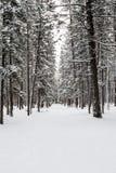 banff εθνικός χειμώνας πάρκων του Καναδά Στοκ Φωτογραφίες