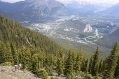Banff Alberta Canada Royalty Free Stock Photography