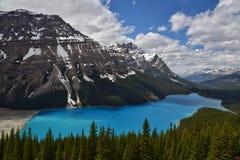 banff jeziorny park narodowy peyto Fotografia Royalty Free