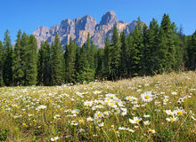 banff Kanada kanadensisk nationalparkvildmark Arkivbild