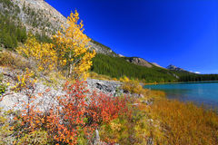 banff lakes parkerar waterfowl royaltyfria bilder