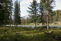 Banff Nationaal Park, Alberta, Canada Royalty-vrije Stock Foto's