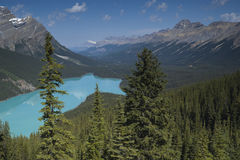 Banff National Park Peyto Lake Royalty Free Stock Photography
