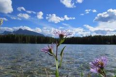 Banff-Naturlandschaft lizenzfreie stockbilder