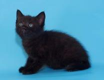 Bang gemaakt zwart pluizig katje op blauw Royalty-vrije Stock Fotografie
