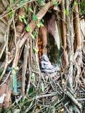 Bang Kung Camp (Buddhist Temple). Bang Kung Camp (Church Prok Pho), SAMUT SONGKHRAM, THAILAND Royalty Free Stock Photo