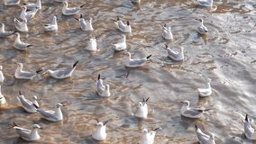Bang Pu Recreation Center, Samut Prakarn, Thailand, Seagulls on beach.  stock video footage
