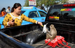 Bang Saen, Thailand: Thai Woman Feeding Monkey Royalty Free Stock Photo