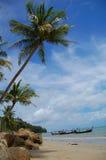 Bang Tao palms. Palms in Long beach Bang Tao Royalty Free Stock Photo
