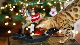 Bangal cat christmas decoration stock video footage