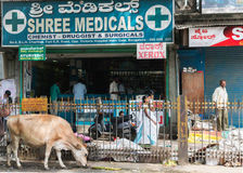 BANGALORE, INDIA - CIRCA OCTOBER 2013: Pharmacy in the old town. Stock Photography