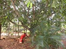Bangalore, Karnataka die, India - Januari 1, de vrouw van 2009 A in Nrityagram, dansdorp dichtbij een boom werken Royalty-vrije Stock Afbeelding