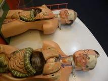 Bangalore, Karnataka, Indien - 8. September 2009 blinde Modelle, zum des Mannes und der weiblichen menschlichen Anatomie zu besch Lizenzfreie Stockfotografie